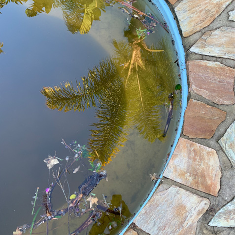 green-pools